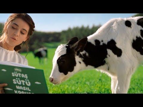 Yeni Sutas Inek Reklami Sut Iyi Olsun Isterseniz