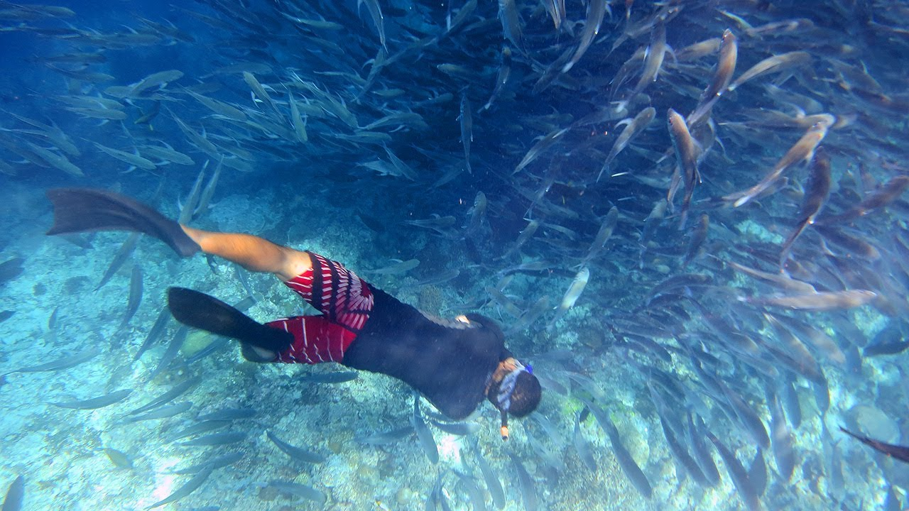 Snorkeling in sipadan island youtube - Sipadan dive sites ...