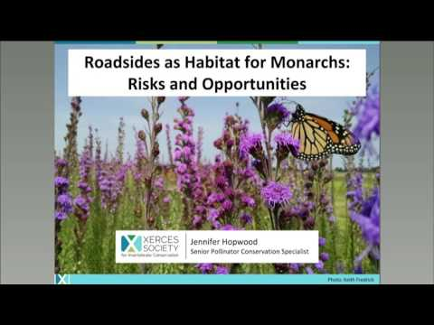 Monarchs and Roadsides