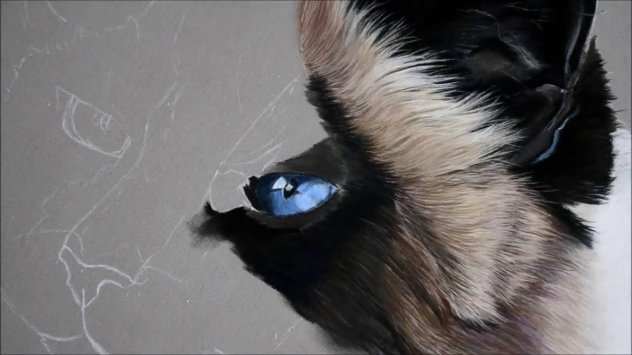 Comment Dessiner Un œil De Chat Bleu Aux Pastels Par L Artiste Cindy