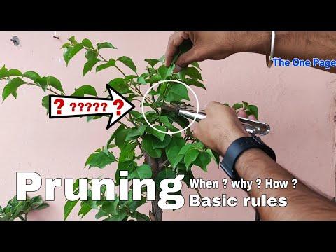 Pruning plants, Best