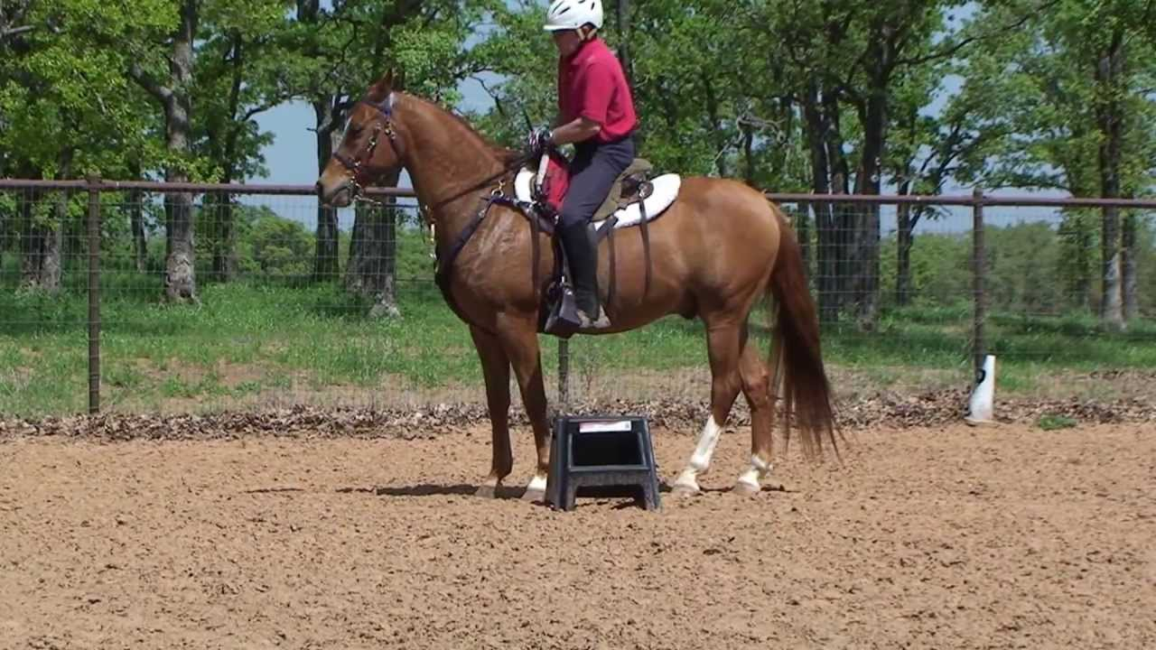 Arabian Endurance Horse For Sale Youtube