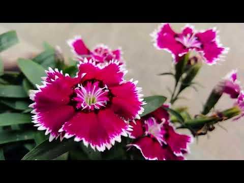attract-abundance-of-money,-prosperity,-luck-and-wealth-while-you-sleep- -theta-binaural-beats-sleep