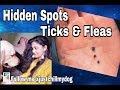 Ticks & Flea : How to find Ticks in your pets // Best Spots of Ticks & Flea in your Dog (TUTORIAL)