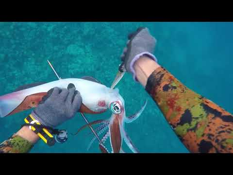 Spearfishing Video Episode 5 By Salman Alblawi