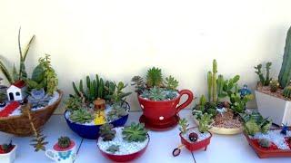 Mini jardins Arranjos de cactos e suculentas
