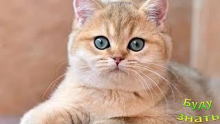 Кто назвал кота ЧУБАЙС? или как завете вы...