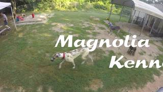 Magnolia Kennel - Large Breed at Play