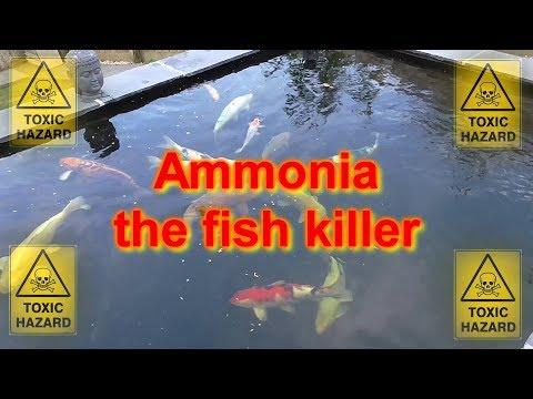 How To Treat A Koi Pond Ammonia Spike