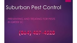 Greer Pest Control - Pest Control Service in Greer