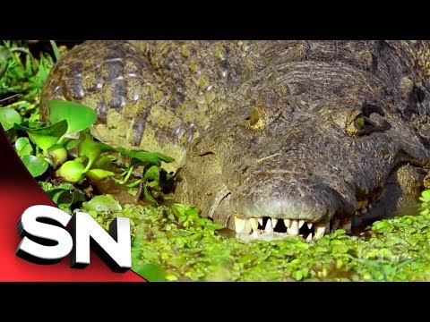 Taken | Crocodile unsuspectingly attacks two friends late at night | Sunday Night