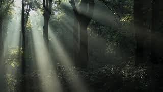 Dźwięk deszczu i zwierząt leśnych, odgłosy przyrody, Do nauki, Do snu, Do czytania
