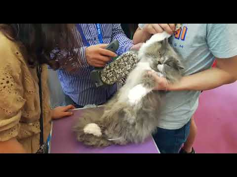 Gentle dematting a very matted armpit of a Cat with the Auto Dog Brush