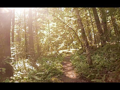 Virtual Nature Walk: Forest River Trail (slow pace)