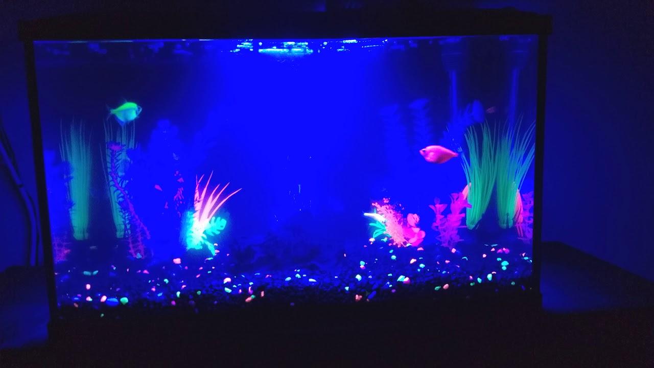 10 gallon glofish aquarium