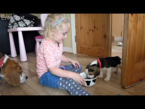 Cute Puppy and Little Girl Meet for the First Time | Charlie the Dog and Baby