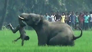 7 Ataques de Elefantes que TERMINARON MUY MAL