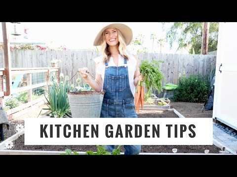 Tips To Start + Grow A Kitchen Garden | DIY, Lifestyle, Gardening | Healthy Grocery Girl YouTube