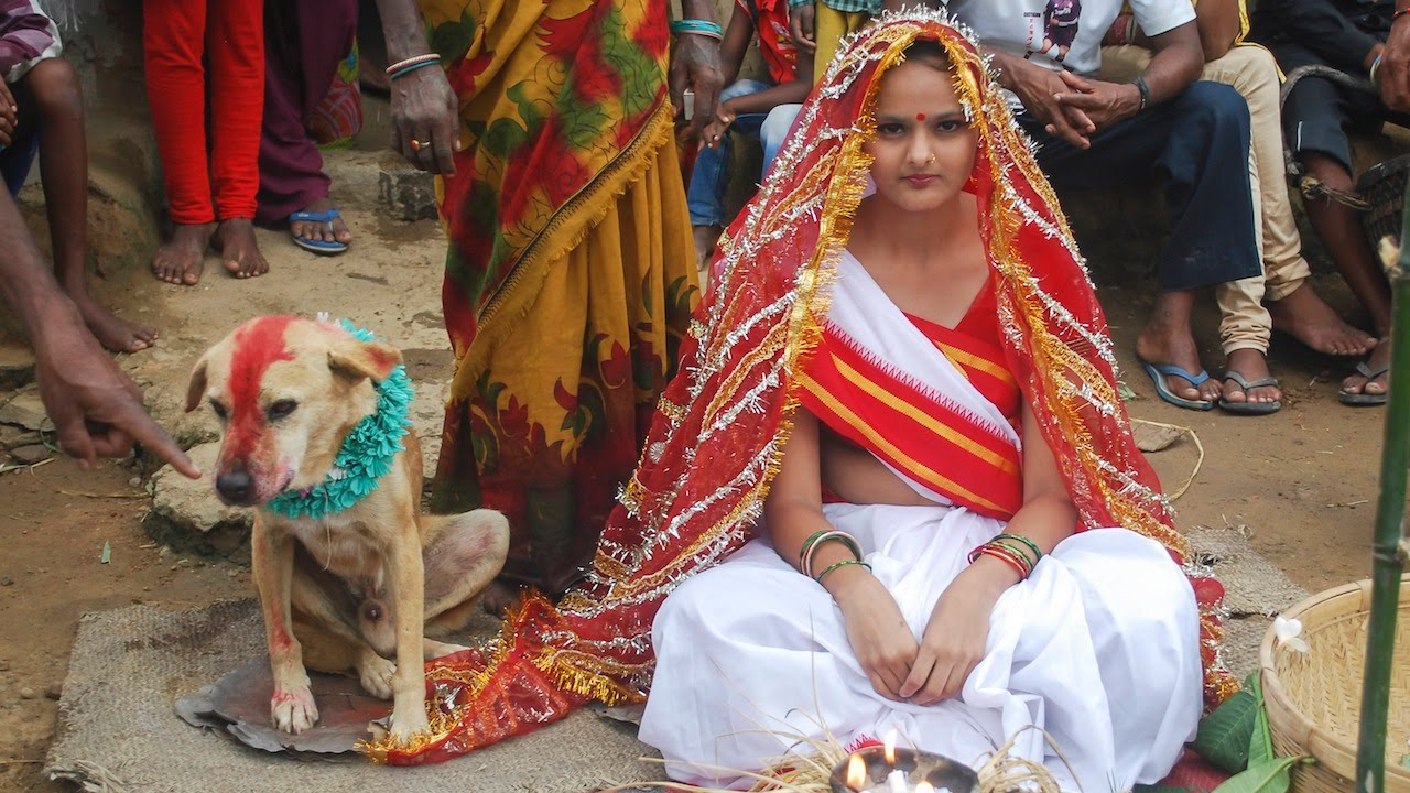Image result for getting married to the dog India