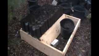 Pawpaw Project - Part 5 Paper Pots Round 2