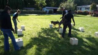 Marianna Drug Detection Dog In Training