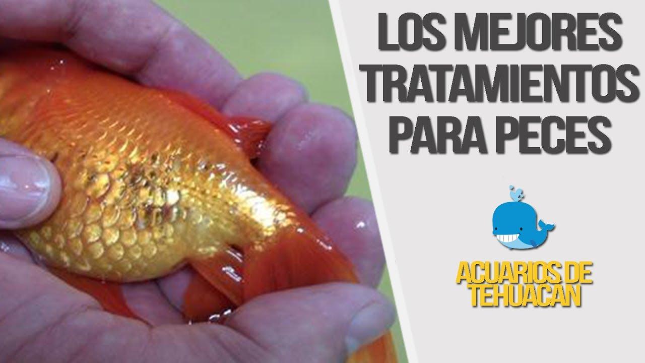 Las 5 principales enfermedades en peces youtube for Enfermedades de peces goldfish