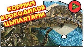 БРОСИЛ КРОКОДИЛАМ ГОРУ ЦЫПЛЯТ! Тянем за хвост НЕ ручного нильского крокодила!