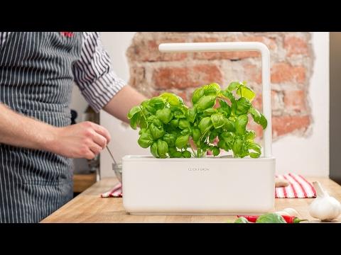 Seeds to herbs. Indoors. Guaranteed.
