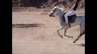 арабские скакуны)(, 2013-07-14T23:44:24.000Z)