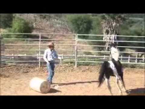 preview of two aggressive horses, David Lee Archer.wmv