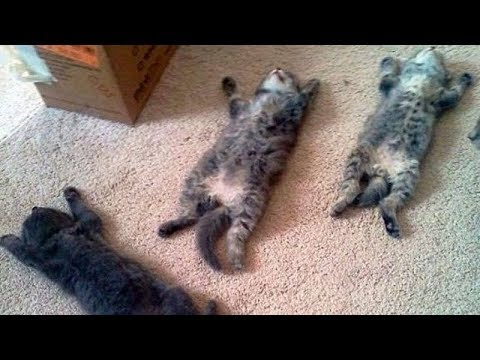 THESE CATS AND DOGS are TOO FUNNY to HANDLE! - Funny CAT and DOG compilation