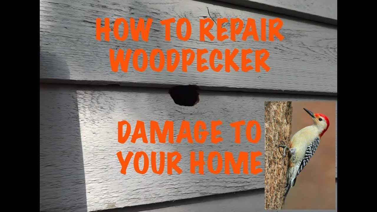 woodpecker damage repair - youtube
