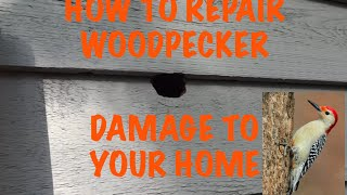 Woodpecker damage repair