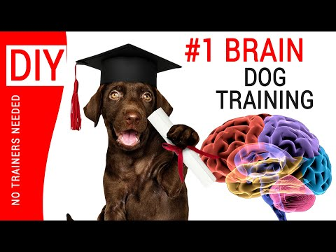 🛑dog-training-classes-near-me-2019-▶︎-brain-training-for-dogs-🐶