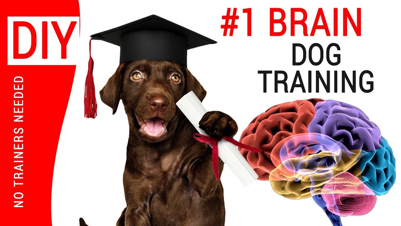 DOG Training CLASSES Near Me In Netherlands ︎ BRAIN Training
