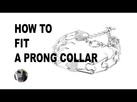 How To FIT A Prong Collar On Your Dog - Robert Cabral Dog Training Video