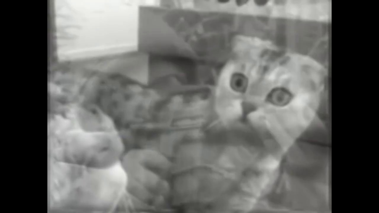 Кот флешбеки