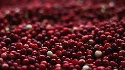 Cranberries, gesund, lecker und helfen nicht nur bei Blasenentzündung