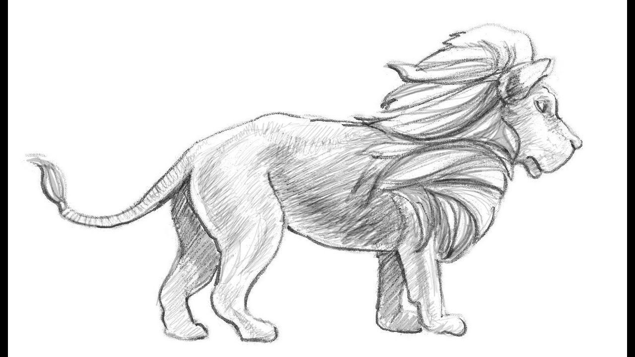 Drawing  How To Draw A Wolf Step By Step