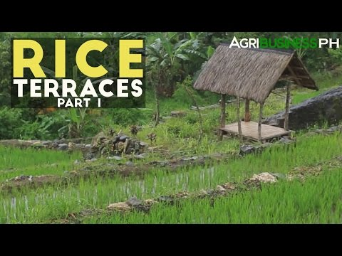 Rice Terraces Part 1 : Rice Terraces in Mindanao | Agribusiness Philippines