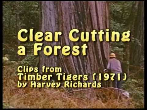 Clear Cutting a Forest