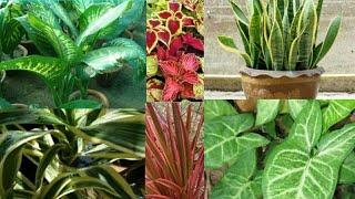 गार्डनिंग की शुरुआत करें इन पौधों के साथ,houseplants for beginners,anvesha,s creativity