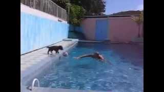 Oscar Cairn Terrier
