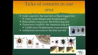 Woodside Equine Clinic:  Tackling Ticks (The Triad of Tick-Borne Diseases) thumbnail