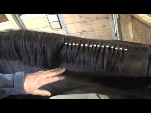 How To Band Your Horse's Mane for Western Classes