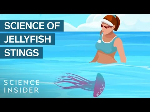Why You Shouldn't Pee On A Jellyfish Sting
