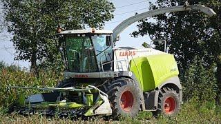 Koszenie kukurydzy- 14 ciągników + 3x Claas Jaguar [Mais in Poland- 3x Claas Jaguar & 14 tractors]