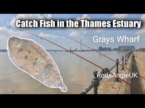 Catch Fish In The Thames Estuary: GRAYS WHARF