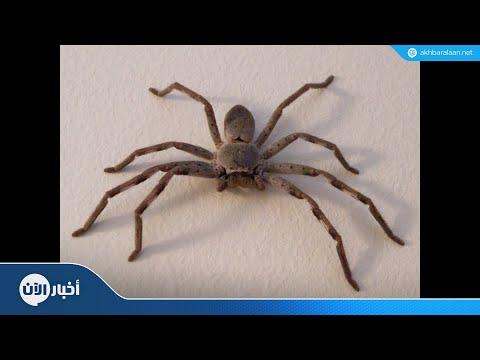 سم العناكب يعالج أخطر أنواع السرطان  - نشر قبل 11 ساعة