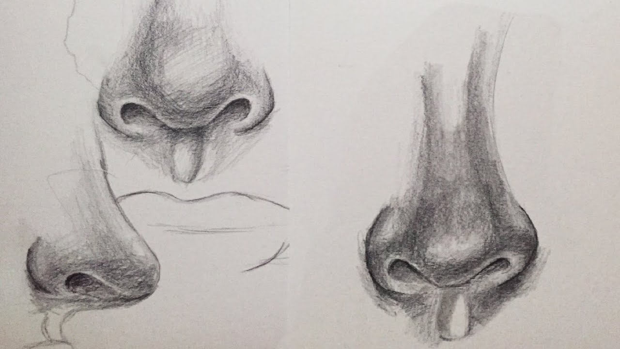 How To Draw A Nose Hd Alpha Art